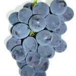 grape_04