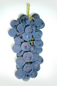 grape_06