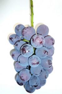 grape_08