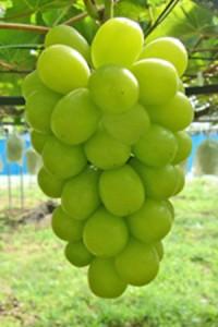 grape_09